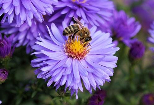 Insekter som bier er nødvendige for frugtsætning og formering hos mange planter