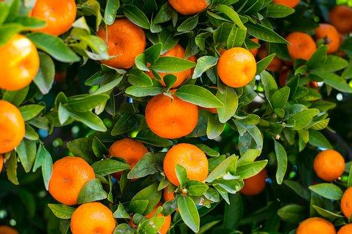 Du kan undgå pesticider ved at vælge økologiske citrusfrugter